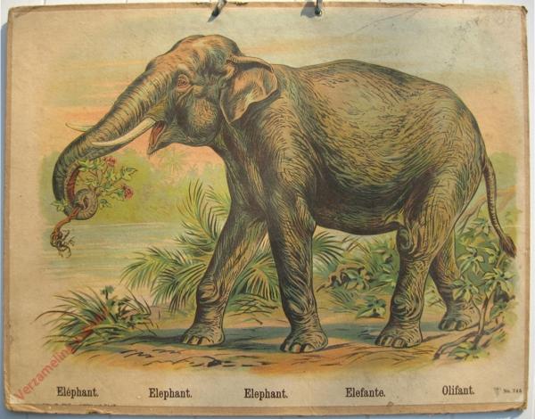 745 - Elephant, Elephant, Elephant. Elefante, Olifant